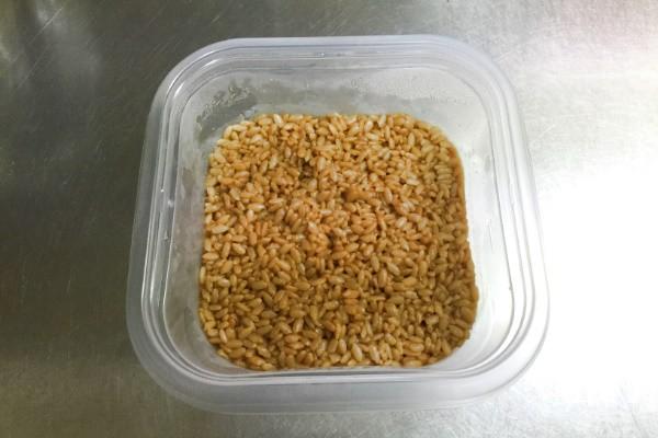 醤油麹2日目